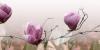 Декор Магнолия 2 розовый