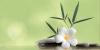 Декор Ливадия салатный