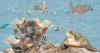 Панно Водный мир (комплект из 12шт)